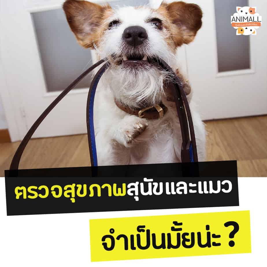 ตรวจสุขภาพสุนัข